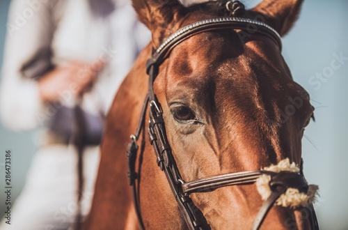 Professional Horse Riding Fototapet