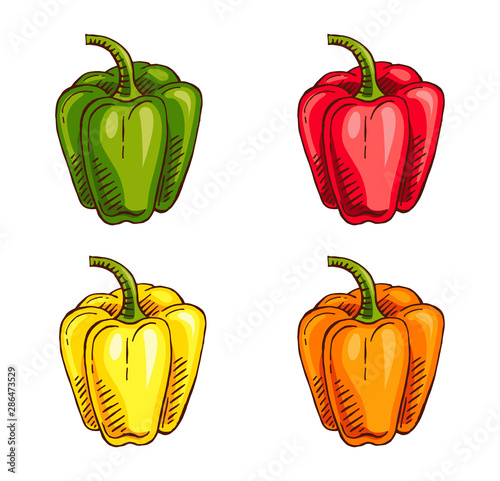Photo hand drawn capsicum color vector illustration