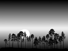 Group Of Pine Tree Silhouettes At Night Background