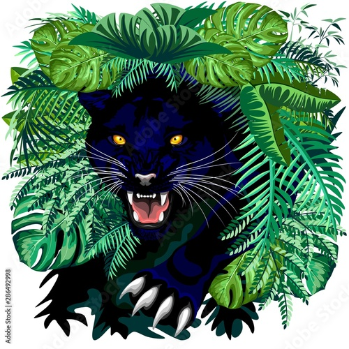 Photo Stands Draw Black Panther Jungle Spirit coming out from the Jungle Vector illustration