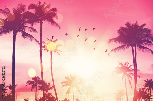 Montage in der Fensternische Rosa Lovey Freedom and nature environment concept. Tropical palm leaf and birds flying on sunset sky with cloud abstract background.