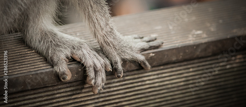 Fotografiet Monkey. Close up photo of monkey's hands and legs