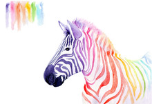 Watercolor Drawing Of An Anima...