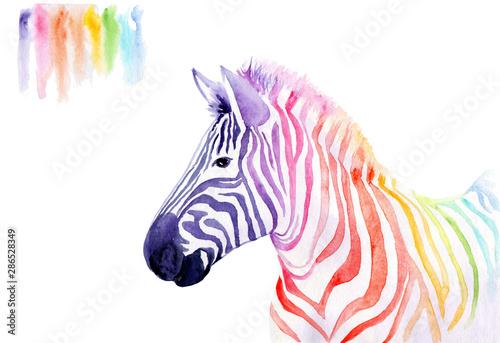 Obraz watercolor drawing of an animal - rainbow zebra - fototapety do salonu