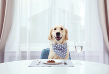 Cute Funny Dog Sitting At Served Dining Table Indoors