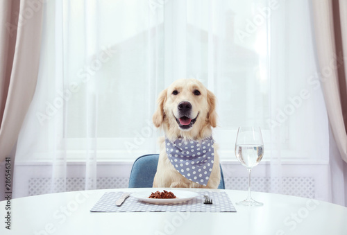 Photo sur Aluminium Chien Cute funny dog sitting at served dining table indoors
