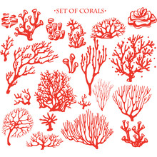 Set Of Underwater Coral Reef E...