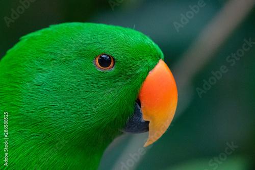 Deurstickers Papegaai Parakeet