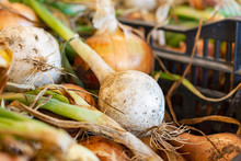 A Close Up Of A Bunch Of Onions For Sale At A Roadside Produce Market.
