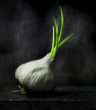 Garlic Bulb That Has Begun To ...