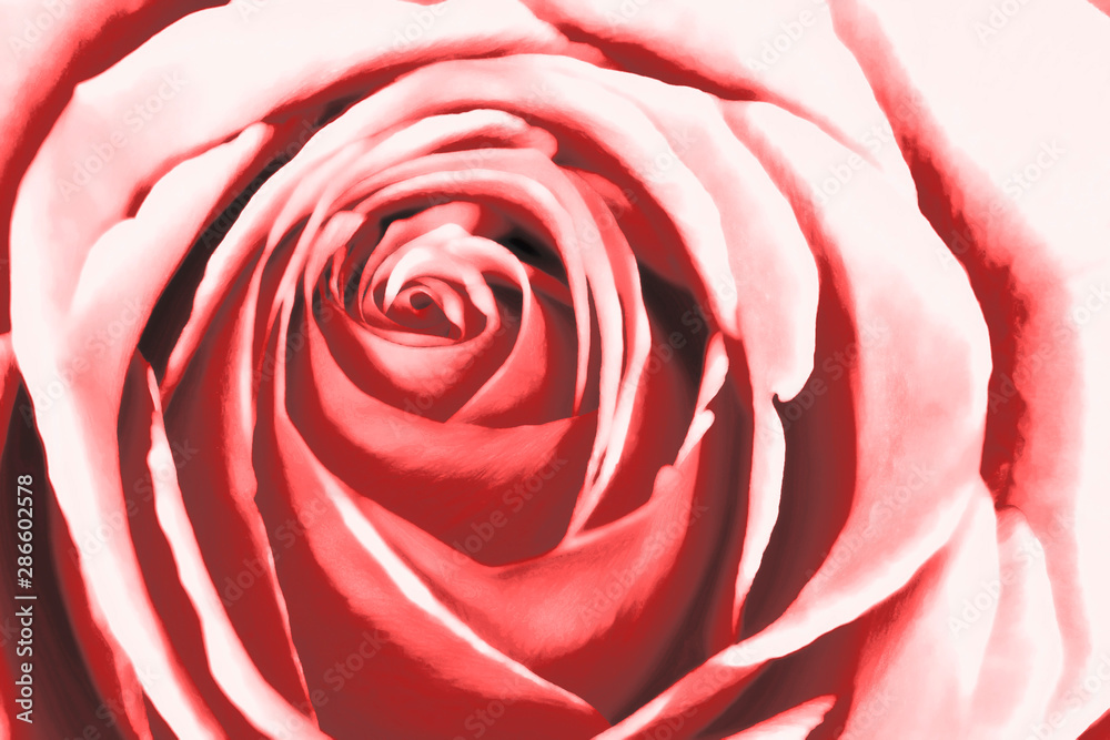 Abstract pink rose watercolour painting