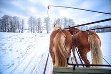 Schlittenfahrt Im Winter In Ma...