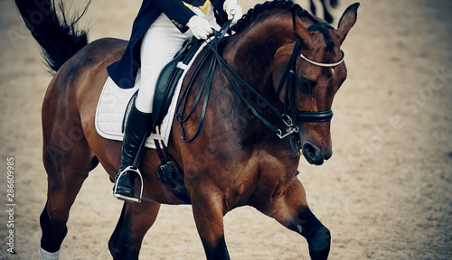 Poster Chevaux Equestrian sport. Dressage of horses in the arena.
