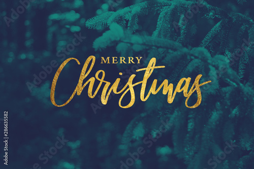 Gold Merry Christmas Script with Duotone Evergreen Branches Background Canvas-taulu