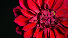 Macro Image Of A Red Dahlia Fl...