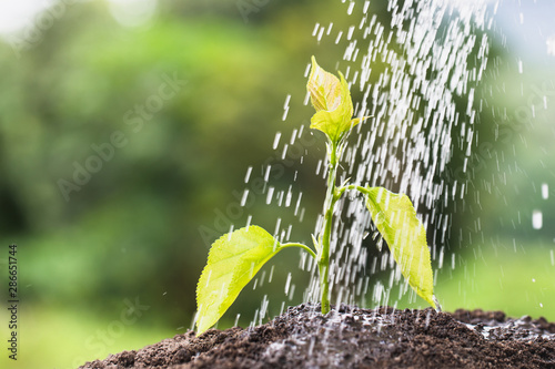 Obraz Watering a tree, Plant growing on soil with watering over sunlight and green background - fototapety do salonu
