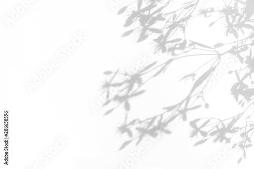 Overlay effect for photo. Gray shadows of delicate flowers on a white wall. Abstract neutral nature concept background. Space for text. Blurred, defocused.  - 286658596