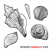 Seashells Vector Set Isolated On White Background. Ocean Conch And Shells Illustration.