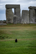 Black Crow Stonehenge In England