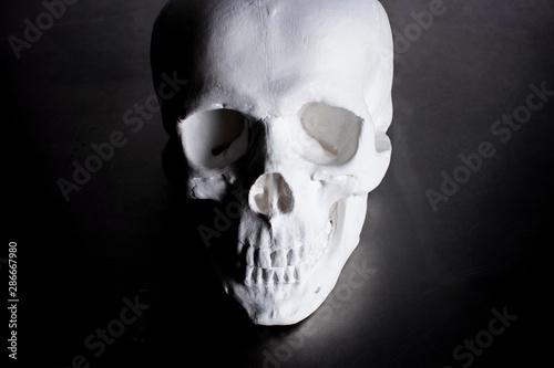 Fotografia, Obraz  人間の頭蓋骨