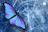 beautiful tropical butterfly sits on the ice with cracks. template for design.