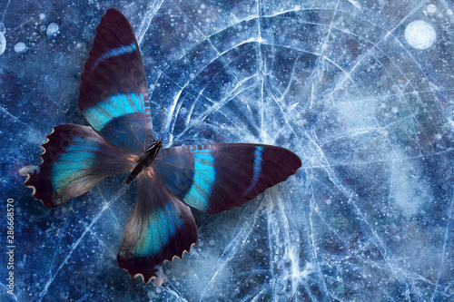 Fototapeta  beautiful tropical butterfly sits on the ice with cracks