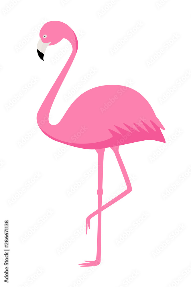 Fototapety, obrazy: Pink Flamingo vector isolate on white background. Exotic bird.