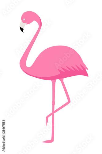 Pink Flamingo vector isolate on white background. Exotic bird.