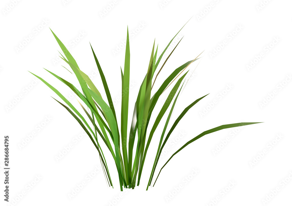 Fototapety, obrazy: 3D Rendering Patch of Grass on White