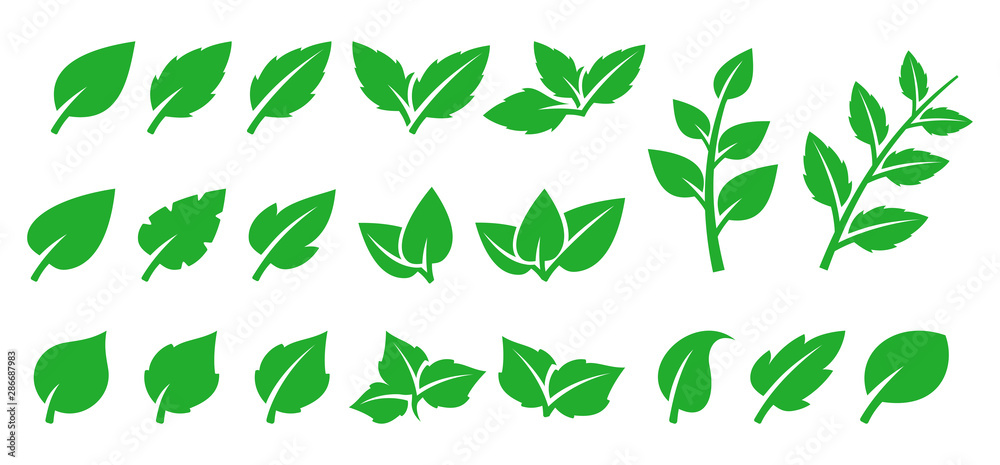 Fototapety, obrazy: Green leaf set