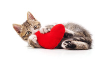 Kitten With Toy Heart.