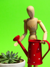 Wooden Mannequin Watering A Succulent Pot Plant With A Red Polka Dot Watering Can.
