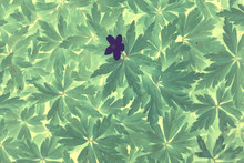 Green Vintage Background Leaves Grass / Abstract Unusual Background Vintage Look