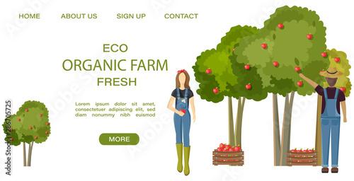 Obraz na plátně  Farmers collecting apple harvest Vector