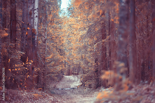 autumn forest north / landscape in the autumn forest, northern, nature view in the fall season