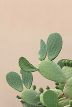 Close Up On A Big Prickly Pear Plant  With Copy Space For Your Text