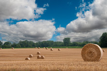 Round Bales Of Hay In Field