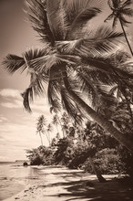 Scenic Sepia Tinted Postcard View Of Rustic Paradise Island Beach With Towering Palm Trees Under Tropical Sky