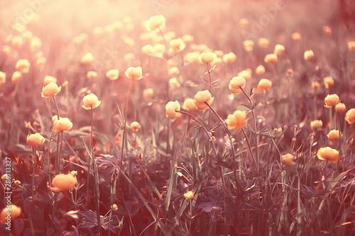 Fototapety, obrazy: spring or summer flowers background / vintage toning nature landscape flowers