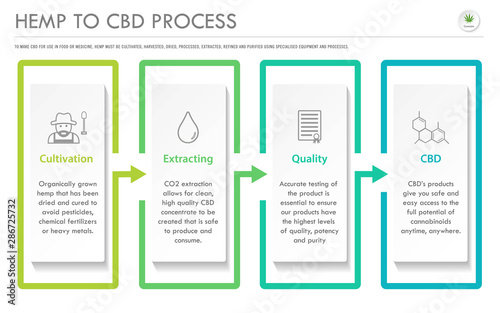 Photo  Hemp to CBD Process horizontal business infographic illustration about cannabis as herbal alternative medicine and chemical therapy, healthcare and medical science vector