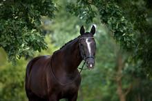 Beautiful Horse Portrait Under An Oak Tree