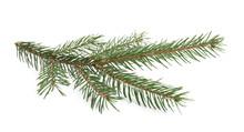 Branch Of Fir Tree On White Ba...