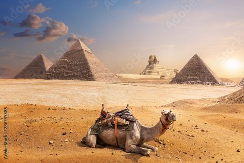 Recess Fitting Beige A camel of Giza in front of the Sphinx and the Pyramids, Egypt