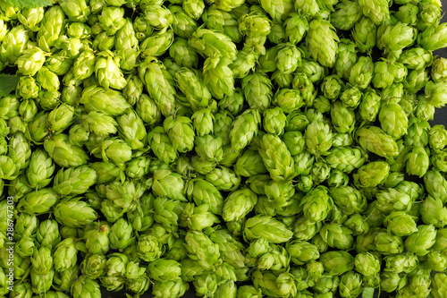 Fotografía Green ripe hop cones for brewery and bakery background pattern.