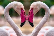 Flamingo Herz