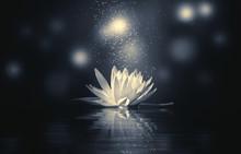 Monochrome Lotus Reflection Light Sparkle