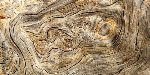 Burlwood Stump Two To One