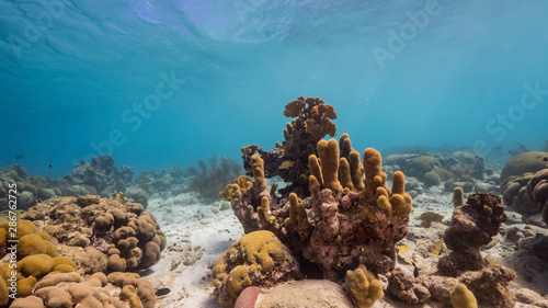 Poster Coral reefs Seascape of coral reef in the Caribbean Sea around Curacao with pillar coral and sponge