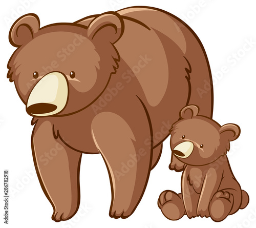 Bear and cub on white background