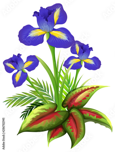 Iris flowers and ferns on white background
